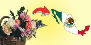 Send Flowers to Mexico-FI